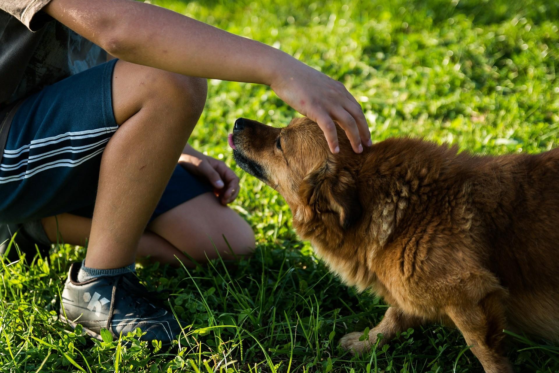 Hunde erziehen Mischling