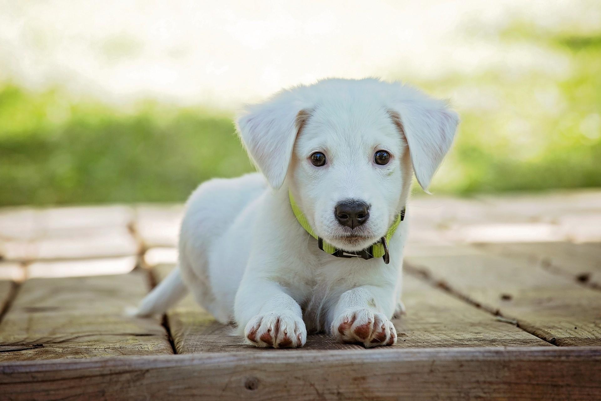 Hunde erziehen Clickertraining